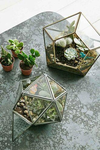 home accessory terrarium plants cactus