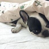 home accessory,yeah bunny,cacti,cactus,bedding,pillow,queen bed,frenchie,succulent,plants,sweet dream