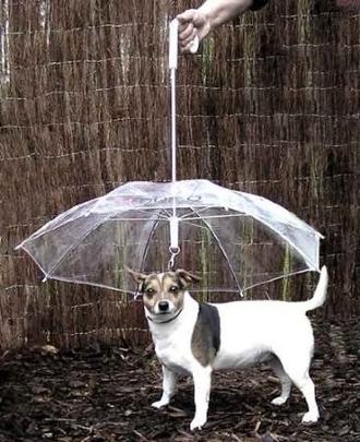 bag umbrella animal transparency funny animal clothing