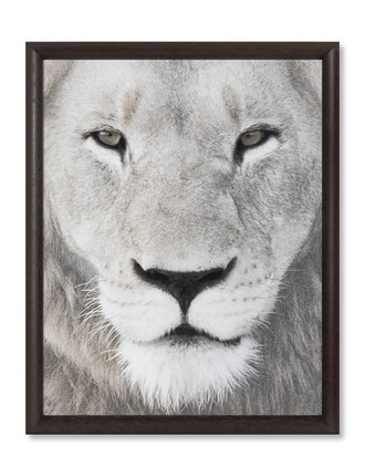home accessory lion black and white black white gray grey photography sketch picture frame home decor bedroom sketching drawing cats