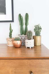 home accessory,copper,cactus,succulents,vase,metallic