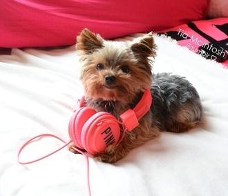 earphones vs victoria's secret headphones animal