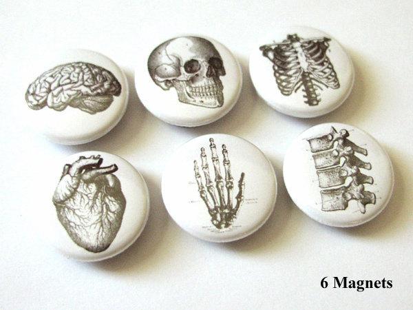 6 Anatomy MAGNETS Set 1 inch brain skull anatomy hand anatomical heart vertebrae human body anatomy geekery magnet skeleton stocking stuffe
