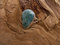 Rf109 sterling silver ring with larimar stone
