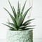 Cast cement pineapple planter: green – spartan