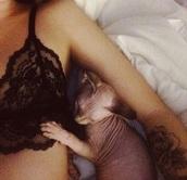 underwear,acacia brinley,animal,dog,lace lingerie