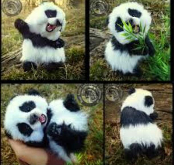 home accessory posable panda wood splinter lee lovely
