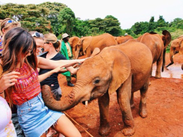 shirt red pretty elephant boho indie