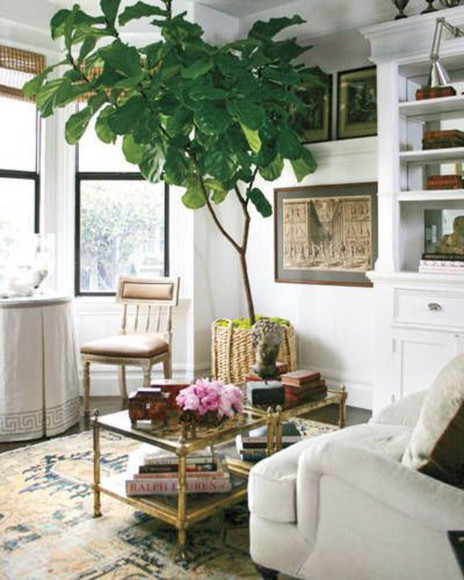 pinterest interior indoor tree plant living room home decor
