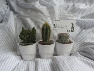 home accessory cactus home decor house design plants green white