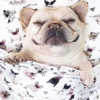 home accessory yeah bunny bedding set pillow dog frenchie cute