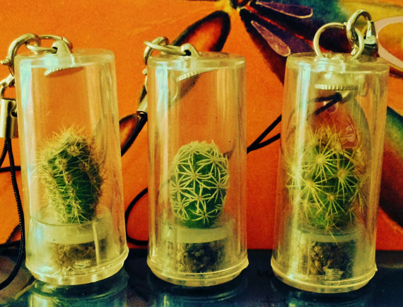 3 micro terrariums, tiny terrerium, cactus plants, very neat plants