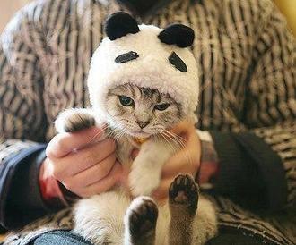 cats pet animal cute hat panda animal clothing love