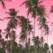 Babe paradise — home