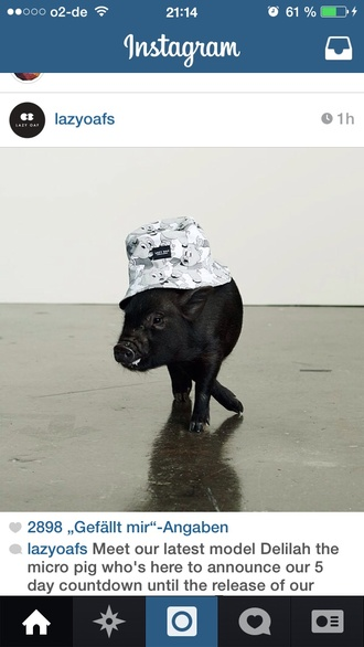 lazy oaf bucket hat animal pet