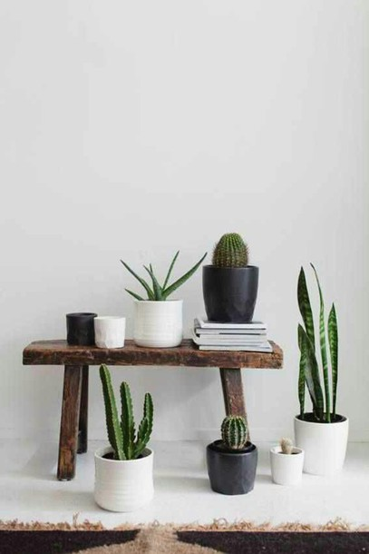 Home accessory plants succulents cactus terrarium pot white black brown stool table - Home decor picture ...