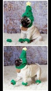 hat,green,christmas,dog,pugs,animal clothing