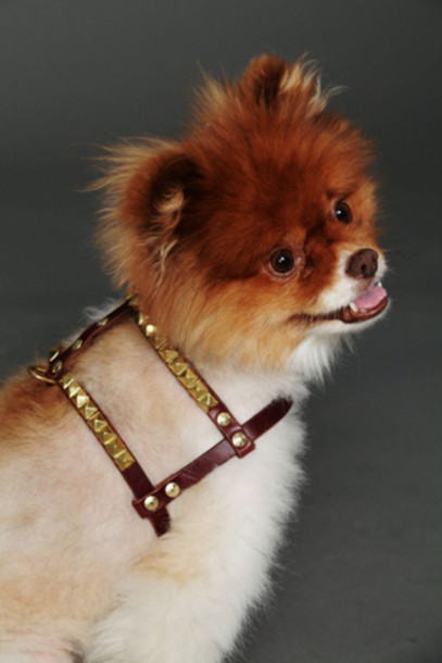 dog harnesses dog supplies home pet pets animals pet supplies small animal supplies belt