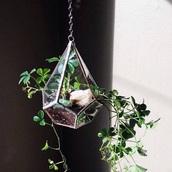 home accessory,flowers,plants,garden party,lifestyle,bag,metallic home decor,terrarium,vases,decorative vases