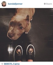 shoes,dog shoes,kendall jenner,sneakers,dog,lifestyle