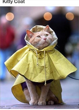 coat cats raincoat animal clothing