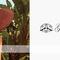 Designer | gladys tamez millinery | luxury hats | fwrd