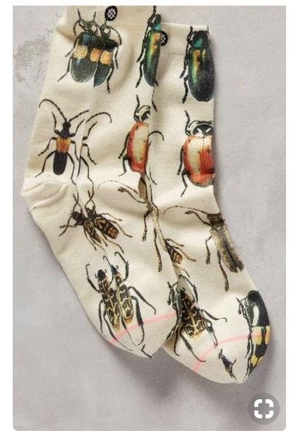 socks socks bug bug white cute