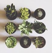 artificial plants,aloe vera,plants,pot plants,home decor,lifestyle
