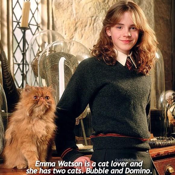 hermione harry styles sweater