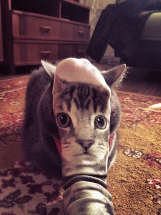 socks cats cat face