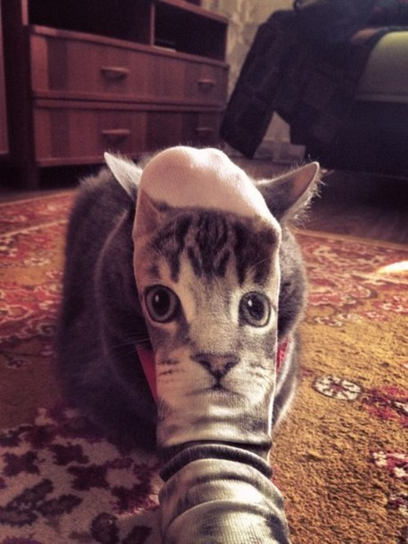 socks cats cats cat face
