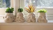bag,pots,plants,succulents