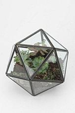 Turning triangles terrarium