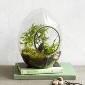 home accessory,hipster,plants,terrarium,book,nature,pastel green