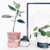 home accessory,blue,white,plants,pot,terrarium,green,home decor,decoration,flowers,bedroom,interior,grey,black