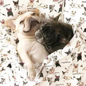 home accessory yeah bunny bedding pillow dog pugs frenchie frenchbulldog