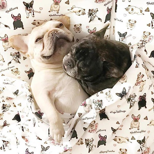 home accessory yeah bunny bedding bedding pillow dog dog pugs frenchie frenchbulldog