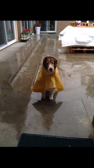 jacket raincoat coat yellow dog animal animal clothing