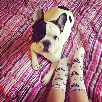 socks yeah bunny pugs dogs frenchie