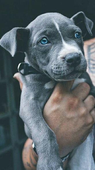 bag dog cute