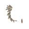 Hematite leaf stone earcuff