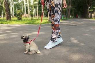 pants printed joggers joggers pugs pug print all over print fullprint full print streetwear fashion clothes sport pants animal print streetstyle sportswear sports pants pug joggers pant suit printed pants