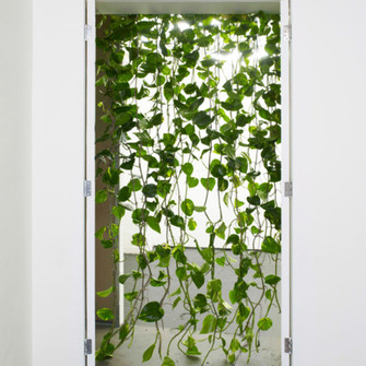 sunglasses door way vines hanging nature decor nature curtains leaves tropical home decor middle earth earthy green the middle