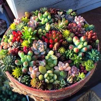 home accessory flowers plants cactus