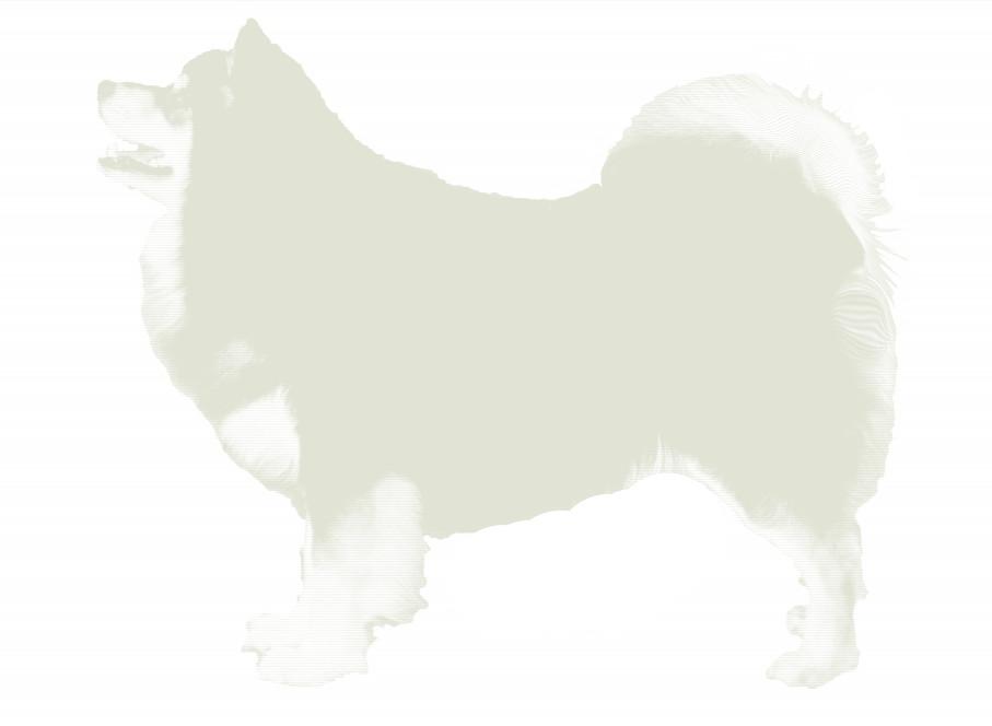 Infindigo Finnish Lapphunds