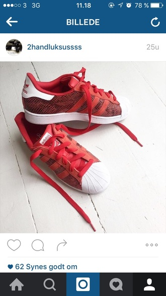 shoes red adidas superstars adidas sneakers snake print white