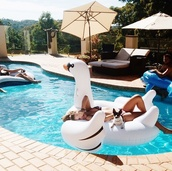home accessory,pool accessory,pool party