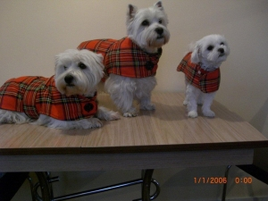 Scottish dogs & accessories | The Scottish Shop