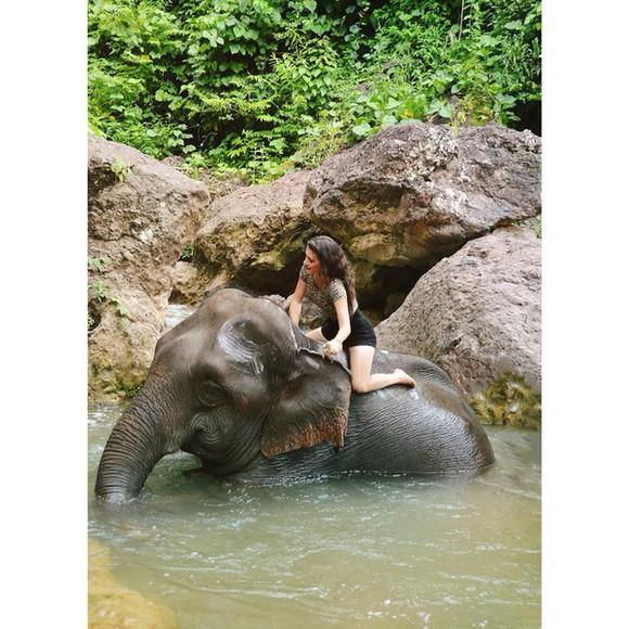 animal print t-shirt elephant