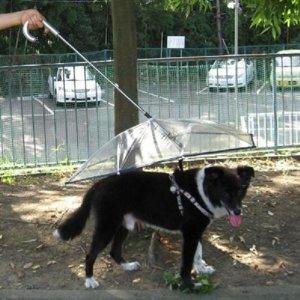 Pet umbrella (dog umbrella) keeps your pet dry and comfotable in rain, : amazon.com : happy pet travel : pet supplies